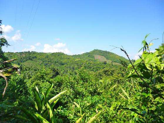 Crean nueva área de conservación privada en San Martín