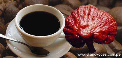 Difundiran bondades ganoderma café saludable