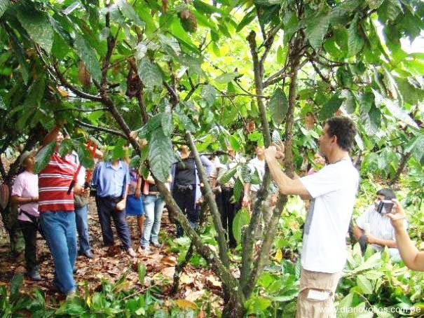 En Chazuta capacitan a productores en cultivo de cacao