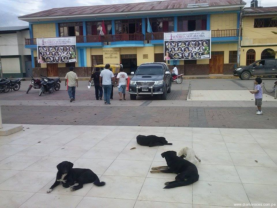 Perros vagos invaden plaza de Armas de Moyobamba