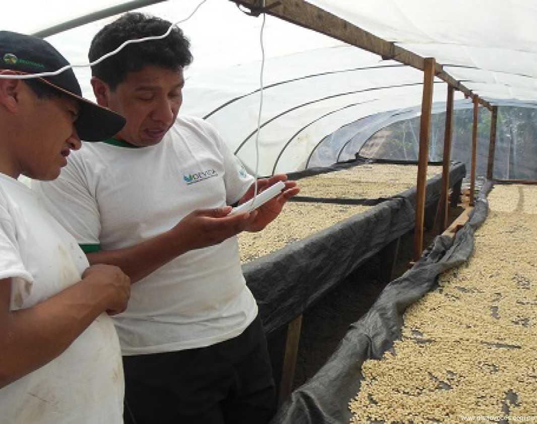 Destinan más de 33 millones de soles para proyectos de café