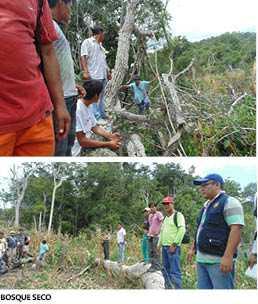 Hay Indiferencia de autoridades para  conservar el bosque seco