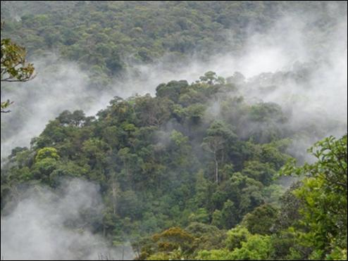 Inician proyecto de recuperación de Bosques de Morona en Moyobamba