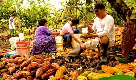 Inauguran local de agricultores de Huicungo