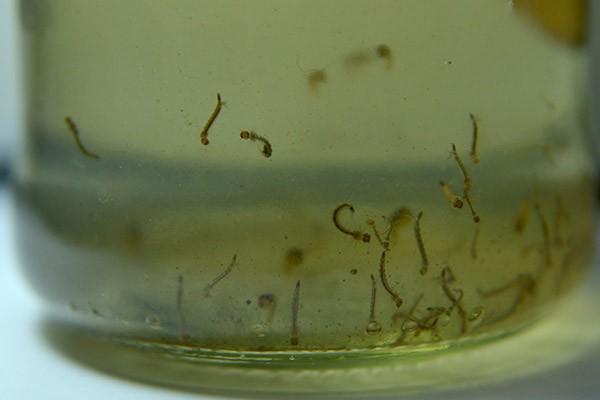 En San Martín se vienen reportando más de mil casos de dengue