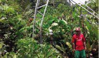 Redes eléctricas sufrieron impactos dejando sin servicio de electricidad a Yurimaguas y localidades anexas.