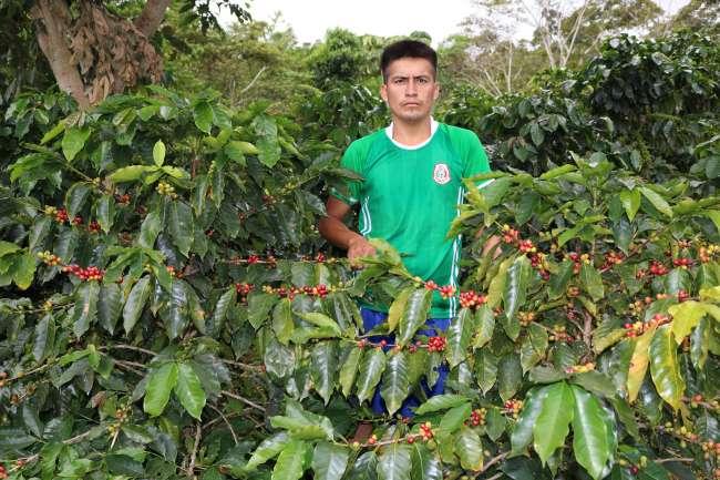 Diseñan planes estratégicos para las organizaciones de café en la región