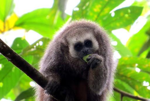 """Más de 170 especies protege la concesión para conservación """"Gran Mirador de Juningue"""""""