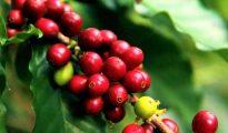 Promueven el desarrollo de los sectores agropecuario y producción en la región San Martín