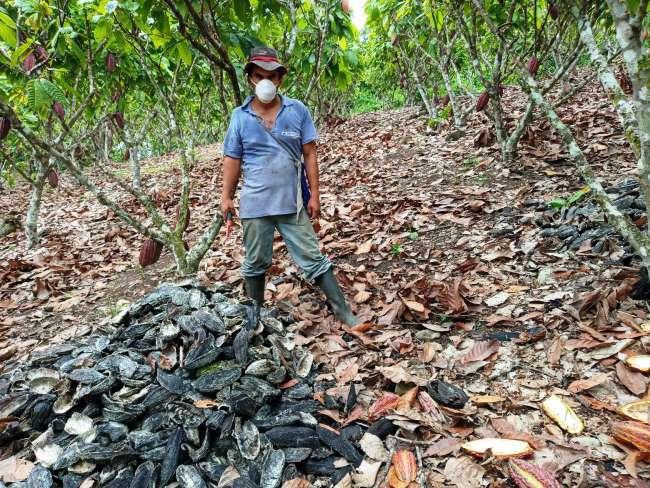 Cacaoteros y agricultores del Valle del Huallaga en quiebra por crisis económica y sanitaria ante el Covid-19