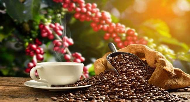 Venta de café generó más de $4.5 millones  en campaña 2020