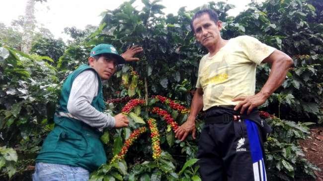 Coordinan acciones para mejorar el cultivo de café