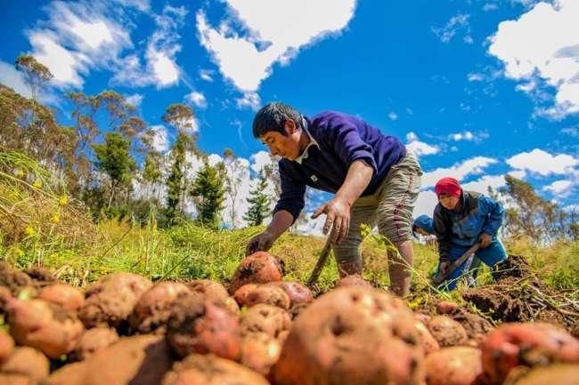Minagri presentará marco orientador de cultivos para la campaña 2020 – 2021