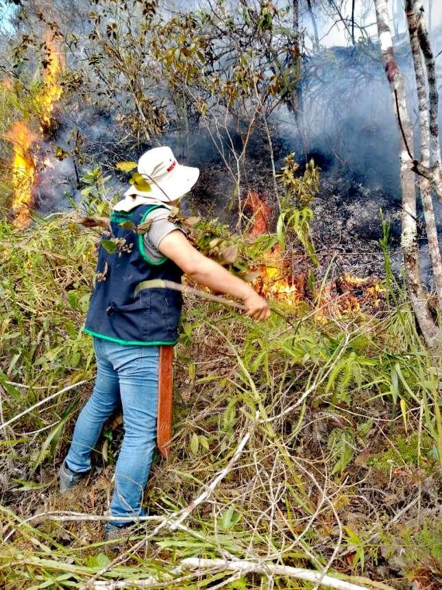 Fiscalía Ambiental constató daño producido por incendio forestal
