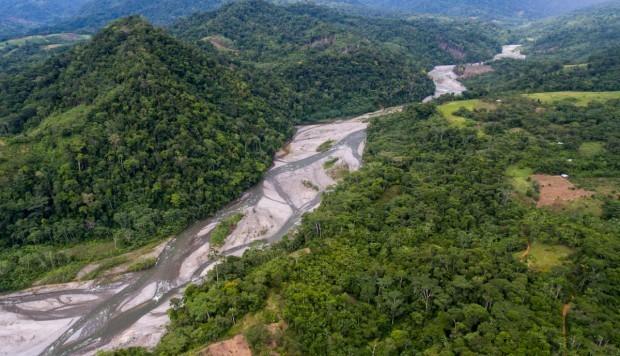 Proyecto Boshumi sembró más de 150 mil plantas forestales