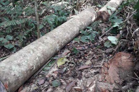 Otro atentado ambiental Morro de Calzada. Alcalde solicita presencia activa de la ARA y la Fiscalía Ambiental de Moyobamba.