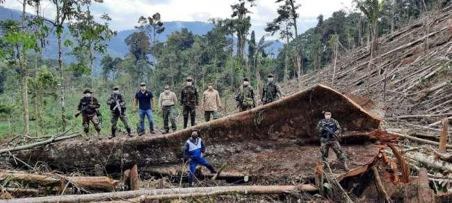 La pandemia es una sombra gris en San Martín… Como la tala de nuestros bosques  que consume y atenta nuestras vidas.