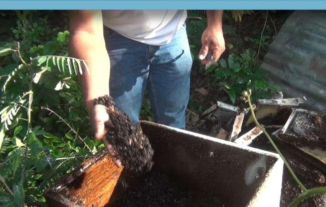 Manos extrañas exterminaron abejas y echaron a perder producción de miel