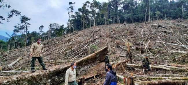 Investigan tala de árboles dentro del Bosque de Protección Alto Mayo