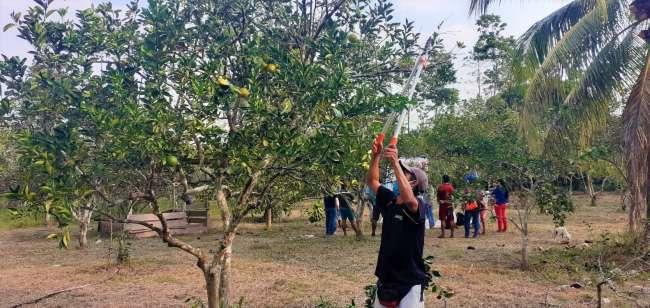 Escuelas de Campo contribuyen a mejorar la productividad del cultivo de la naranja