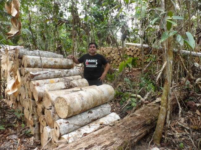 Autoridades comprueban insitu extracción ilegal de madera