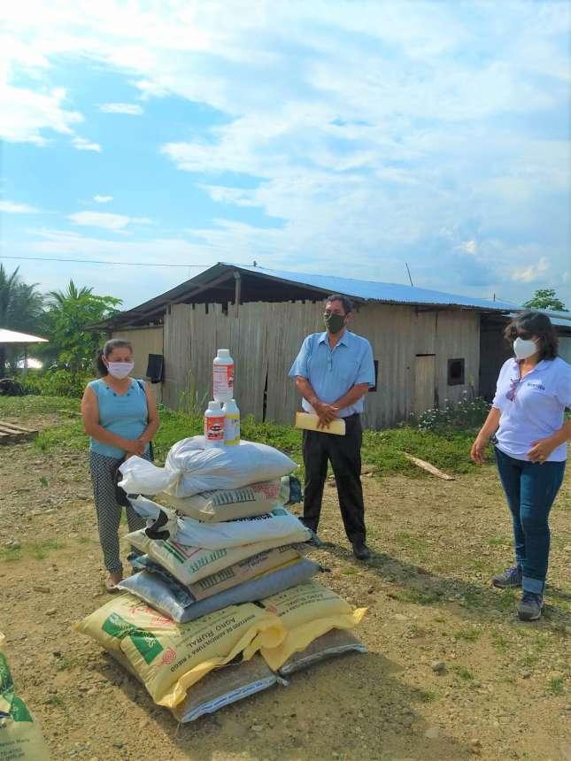Evaluarán resultados de aplicación de fertilizantes para mitigar el cadmio en cacao