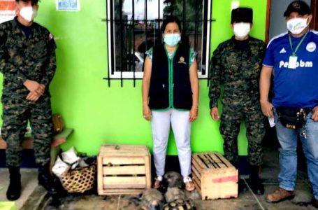 FISCALÍA AMBIENTAL DE ALTO AMAZONAS ENTREGÓ AVES Y TORTUGAS RESCATADAS EN OPERATIVO