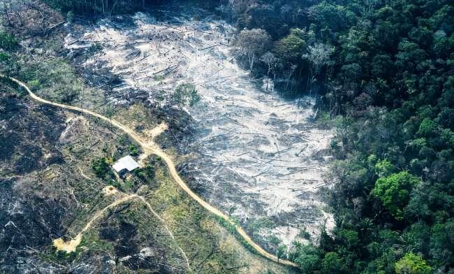 ¿Cuál es la relación entre deforestación y generación de nuevas enfermedades?