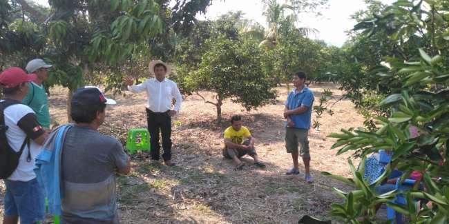 Buscan incrementar rendimiento de producción en el cultivo de la naranja