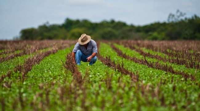 Exoneran al 100% del IGV a fertilizantes para impulsar la agricultura familiar