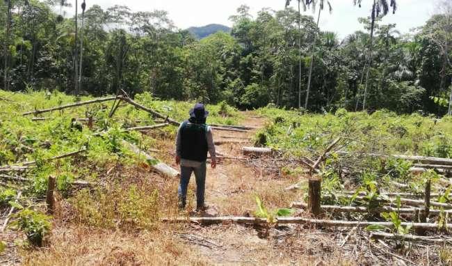 En Cordillera Escalera: Dos hectáreas de bosques de área natural fueron taladas