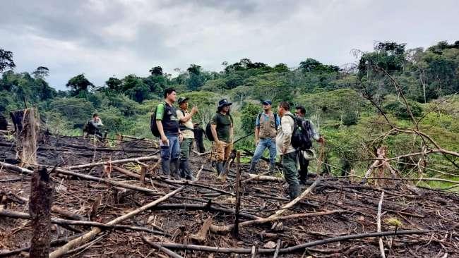 Fiscalía ambiental de San Martín  constató DESTRUCCIÓN DE BOSQUES en el Parque Nacional Cordillera Azul