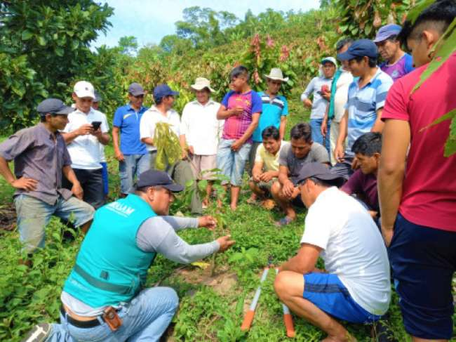 Fortalecen capacidades a productores de cacao de la comunidad El Challual