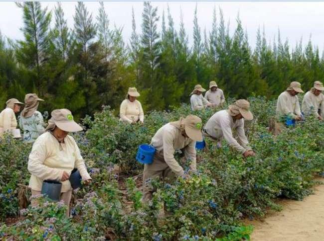 Pleno del Congreso aprueba texto sustitutorio sobre ley agraria