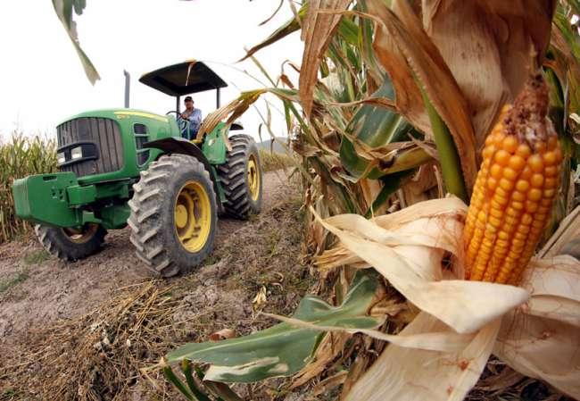 GORESAM entrega una tonelada de maíz amarillo duro a agricultores de Papaplaya