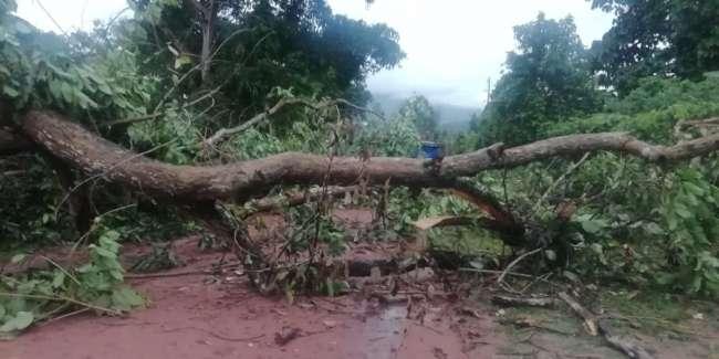 Viviendas afectadas y árboles caídos se reportó desde el distrito de Sauce
