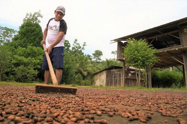 Proyectos café y cacao alcanzaron ventas por más de 40 millones de soles