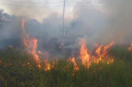 Reportan incendio forestal en terreno del Instituto Superior Tecnológico Nor Oriental de la Selva