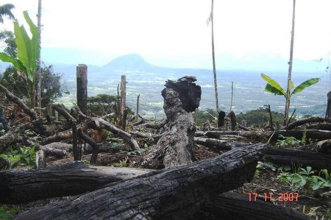 ¿Cuáles son las medidas para controlar el incremento de la deforestación en el  Perú durante la nueva Cuarentena?