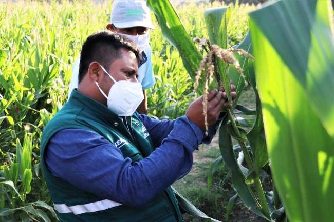 SENASA orienta a facilitadores de municipios de Moyobamba y Rioja para implementación de Escuelas de Campo
