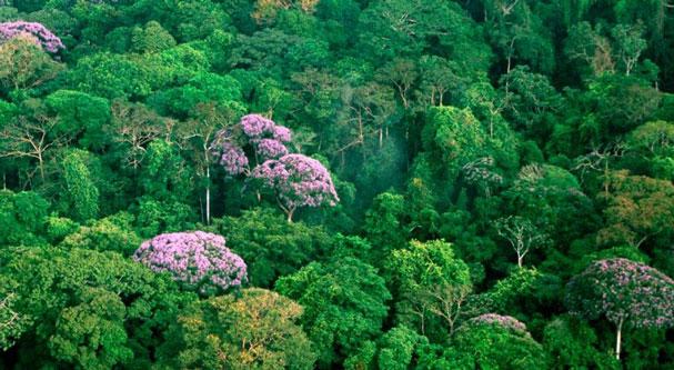 Ministerio del Ambiente invertirá 50 millones de dólares para reducir la deforestación en la Amazonía