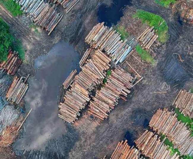 DEFORESTACIÓN: PROPONEN ACCIONES PARA REDUCIRLA EN PROYECTOS VIALES DE LA AMAZONÍA