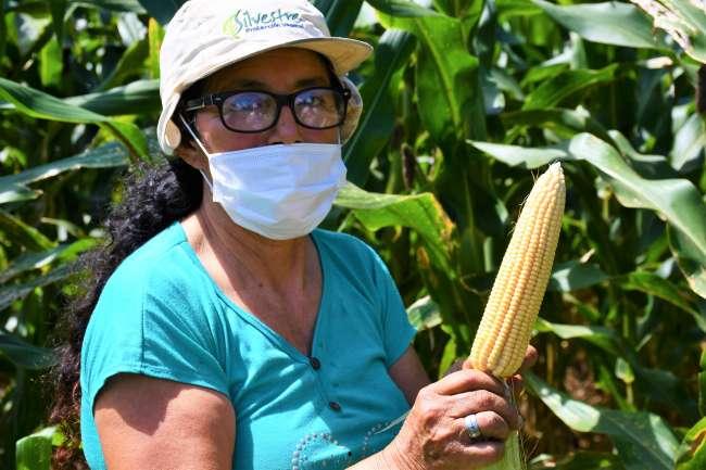 Productores logran notable incremento de producción de maíz en Bellavista