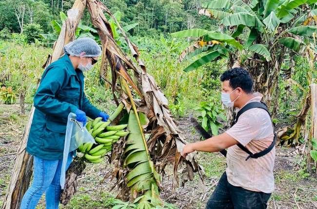 San Martín: SENASA analiza alimentos agropecuarios para determinar condición sanitaria