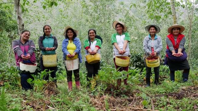 Un café con aroma a  sostenible en el Alto Mayo