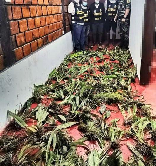 Continua tráfico de Orquídeas extraídas del Bosque de Protección Alto Mayo