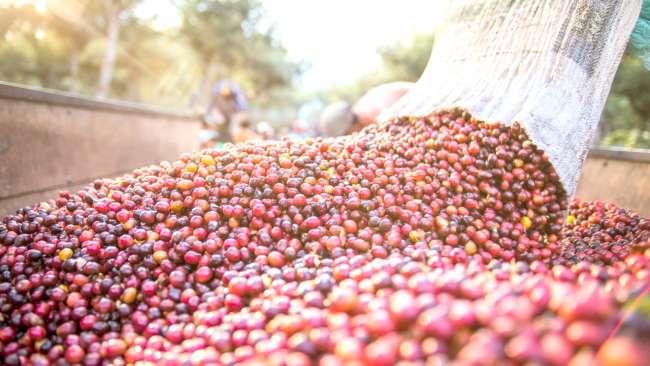 DEVIDA apoyará con 10, 017,416.00 soles para mejorar la Agricultura en Tocache