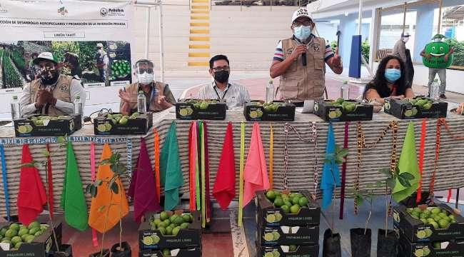 En Lamas: instalan proyecto para sombrío de 126.5 hectáreas de limón Tahití