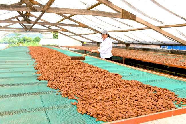 San Martín se va afianzando como una potencia agropecuaria del país