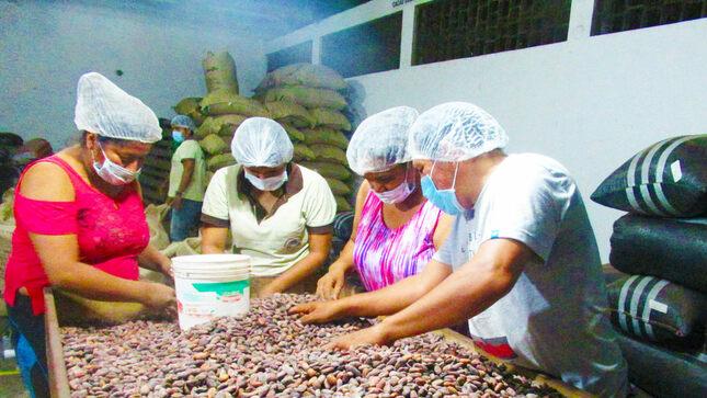 Devida autoriza transferencia de más de 1.3 millones de soles para mejorar cadena de valor de cacao en Tocache